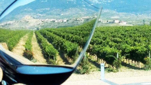Rioja - widok na winnicę Vivanco