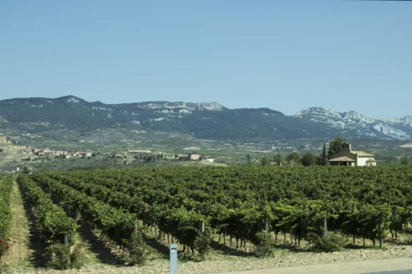 winnica w La Rioja, Vivanco, Briones